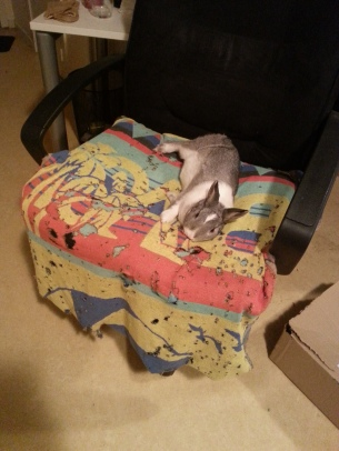 Epically flopping bunny